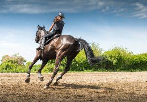 Prague horse riding